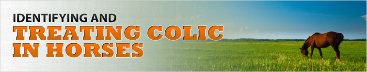 Identifying and treating colic in horses