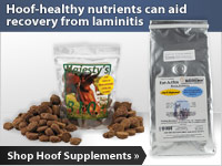 Hoof-healthy nutrients can aid recovery from laminitis